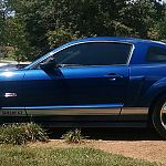 08 Shelby by Amandabh29